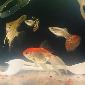 Vissen zwemmen tussen plastic materialen