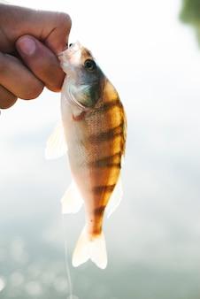 Visser houdt vis in zijn hand op onscherpe achtergrond