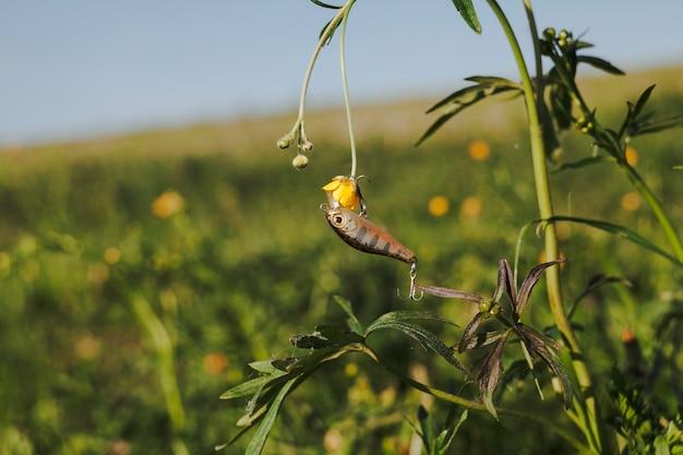 Visserijhaak die op gele bloeminstallatie hangt
