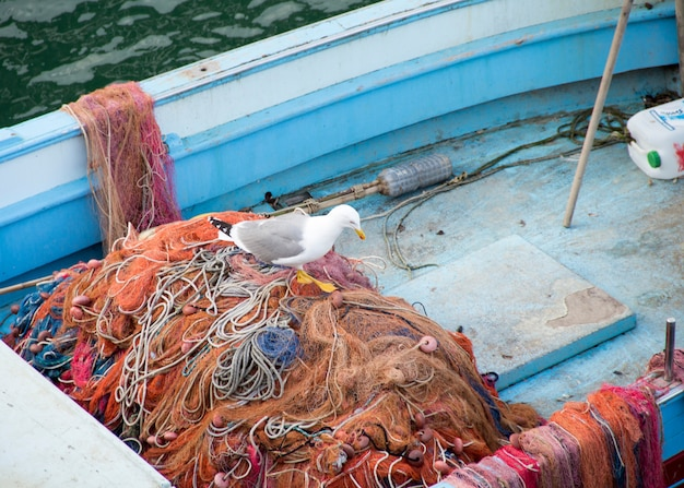 Vissersboot en zeemeeuw op het net in zuid-italië
