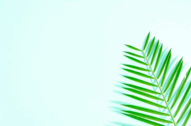 Vlak leg groen blad van palm op muntachtergrond met zachte schaduwen