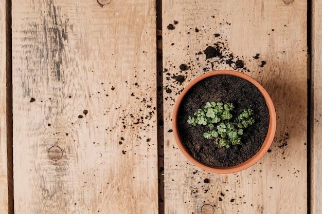 Vlak leg het tuinieren concept met copyspace