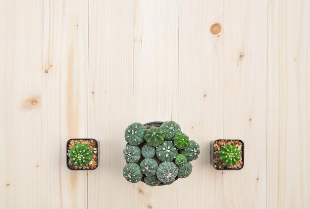 Vlak leg van cactusinstallaties in de pot