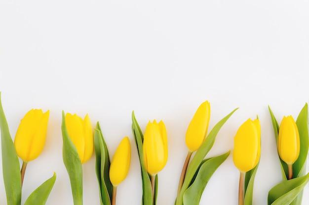 Vlakke leggen met gele tulp bloemen op witte achtergrond. concept voor wenskaart voor pasen, moederdag, internationale vrouwendag, valentijnsdag.