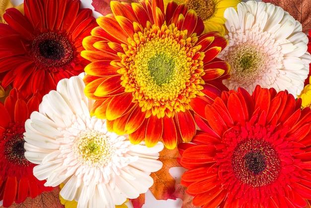 Vlakke leggen met kleurrijke rood geel oranje herfst bloemen op witte achtergrond. bright fall, thanksgiving day concept. bovenaanzicht, kopieer ruimte