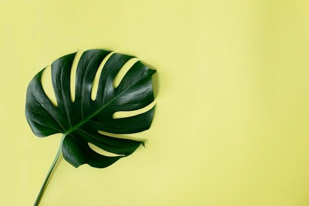 Vlakke leggen met monstera palm groen blad op lichtgroene achtergrond. strandseizoen concept, eco-milieu concept. tropisch klimaat, groei van thuisplanten.
