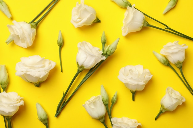 Vlakke leggen met mooie witte rozen op gele achtergrond