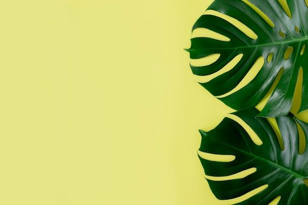 Vlakke leggen met twee monstera palmbladeren op lichtgroene achtergrond. strandseizoen concept, eco-milieu concept. tropisch klimaat, groei van thuisplanten.