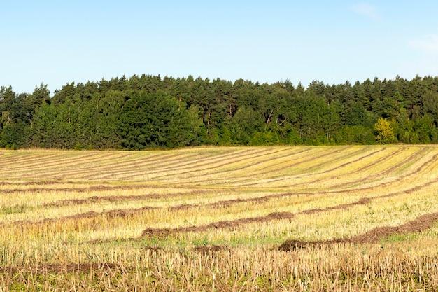 Vlakke rijen stro koolzaad in het zomerseizoen na het oogsten van planten, landschap