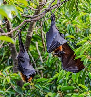 Vleermuizen rusten op boom