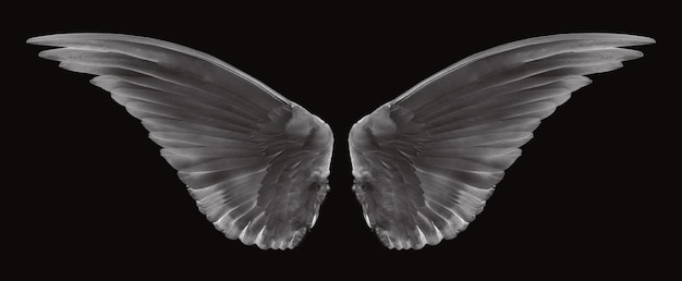 Vleugel van vogels op zwart