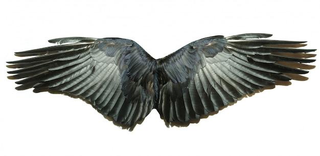 Vleugels geïsoleerd op wit
