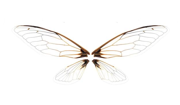 Vleugels van insect cicade op witte achtergrond