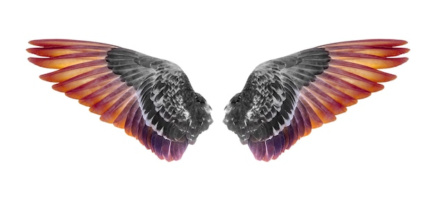 Vleugels van vogels geïsoleerd op een witte achtergrond