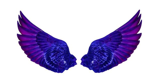 Vleugels van vogels geïsoleerd op wit