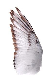 Vleugels van vogels geïsoleerd op wit.