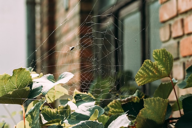 Vlieg in het spinnenweb