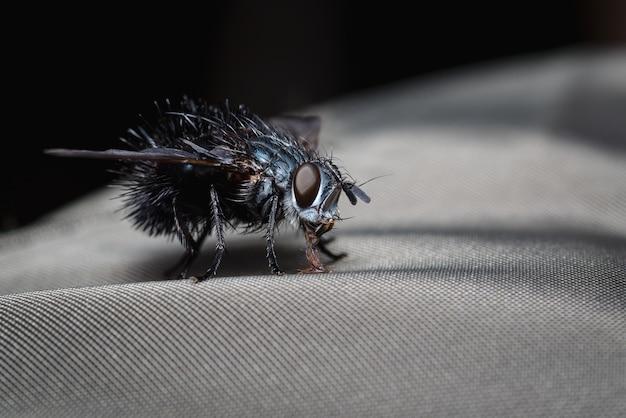 Vlieg op zoek naar voedsel bovenop een stof