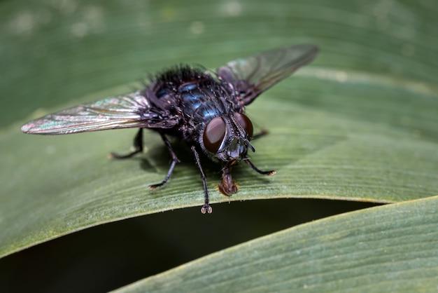 Vlieg op zoek naar voedsel op sommige bladeren