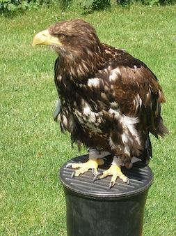 Vlieg vogel roofvogel prooi vogelperspectief s
