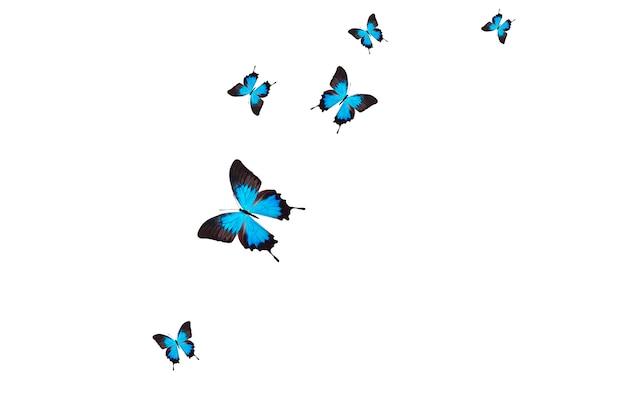 Vliegende blauwe vlinders geïsoleerd op een witte achtergrond. hoge kwaliteit foto