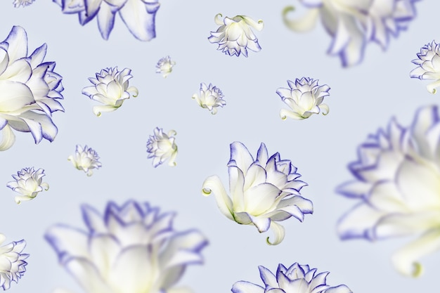 Vliegende bloemen van pioen lelie witte bloeiende lelies bloeien met paars