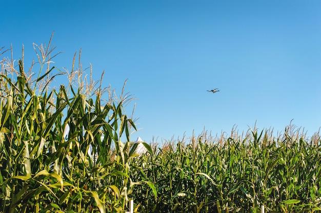 Vliegende drone boven maïsveld. concept drone-enquête in de landbouw