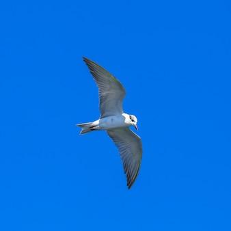 Vliegende meeuwen in blauwe hemel en tropische zee