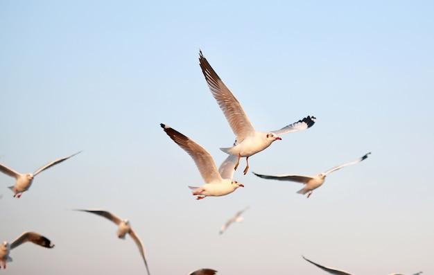 Vliegende meeuwen in de lucht
