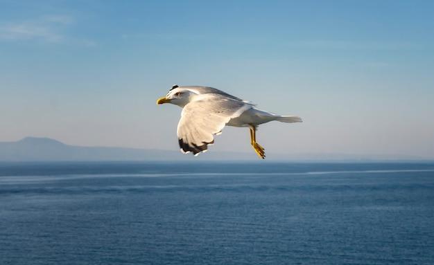 Vliegende meeuwen over de zee