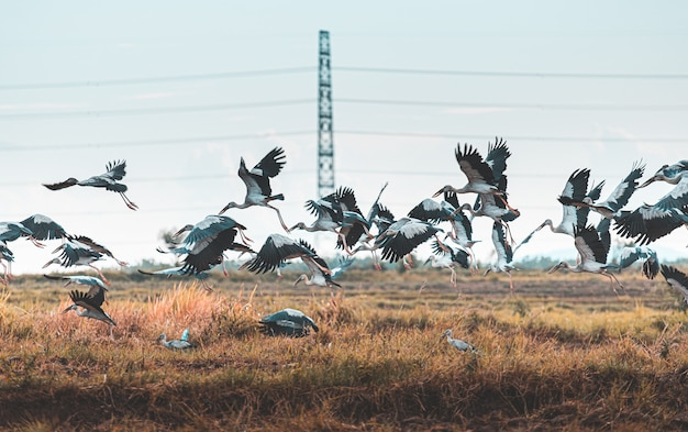 Vliegende vogels in de natuur Premium Foto