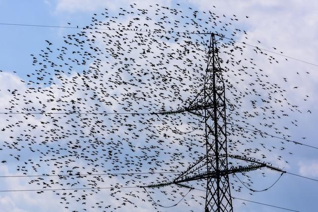 Vliegende vogels. team van spreeuwen vliegen en hoogspanning elektrische toren.