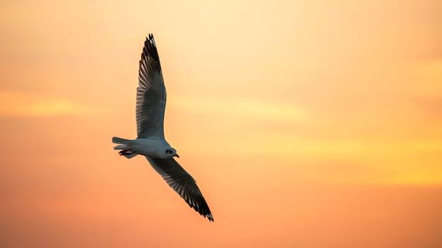 Vliegende zeemeeuw bij schemeringhemel