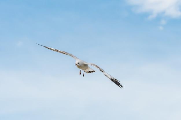 Vliegende zeemeeuw op blauwe hemel