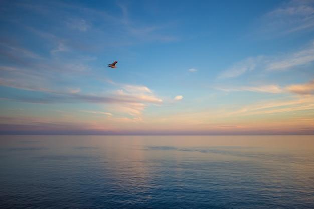 Vliegende zeemeeuw op het strand