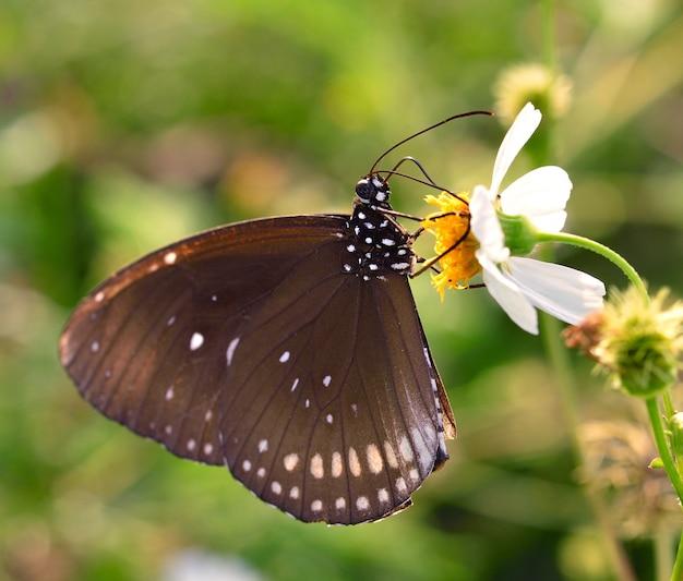 Vlinder aan bloem in de tuin