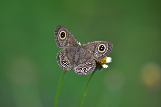 Vlinder aan bloem in een weiland, in het voorjaar close-up van een macro.