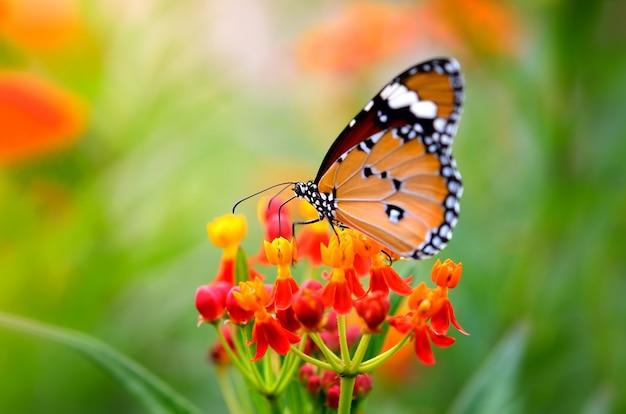 Vlinder aan bloem