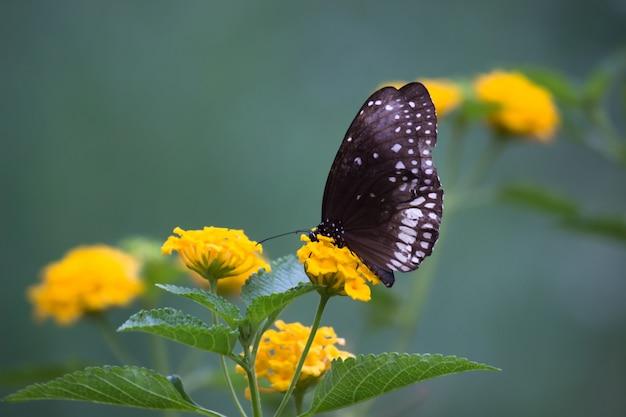 Vlinder aan de bloem plant