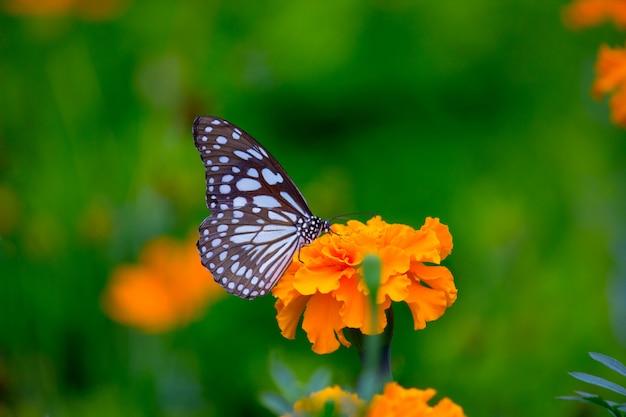 Vlinder aan de bloem