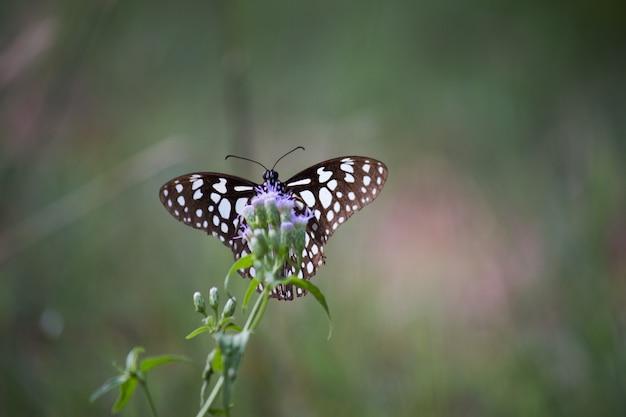 Vlinder aan de bloemplant