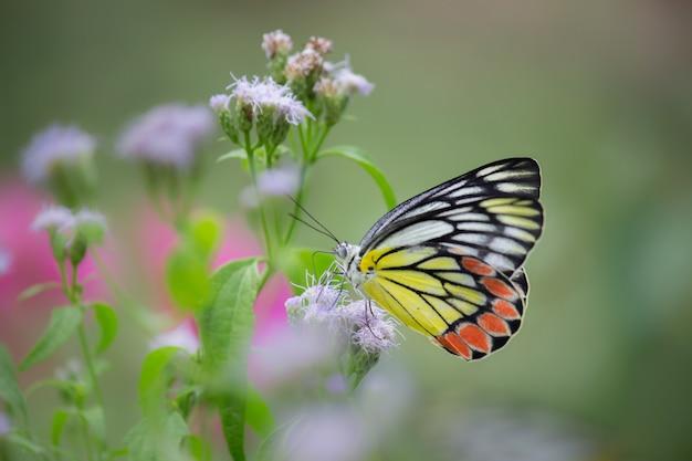 Vlinder aan de bloemplanten