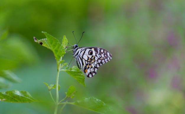 Vlinder aan de plant