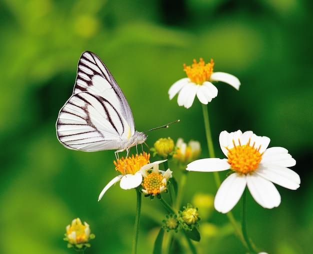 Vlinder aan een bloem