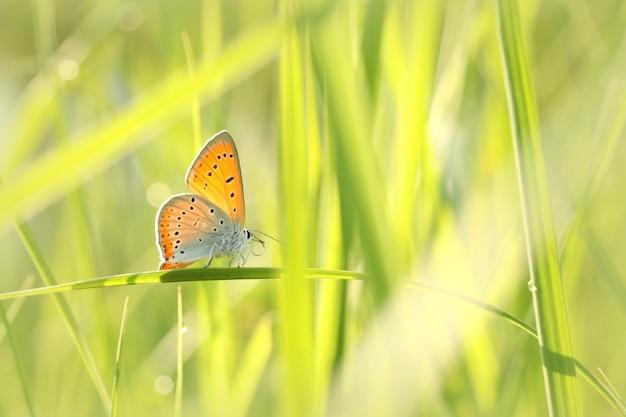 Vlinder aan een lenteweide in de zon Premium Foto