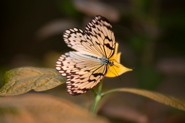 Vlinder bij het vlinderpaleis in branson, missouri