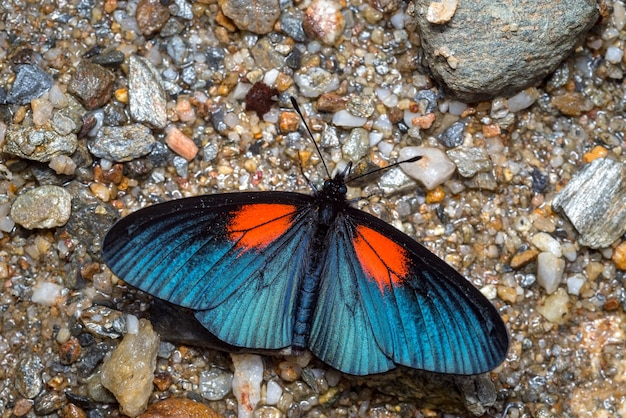 Vlinder die op de grond zonnebaadt om zijn vleugels te verwarmen