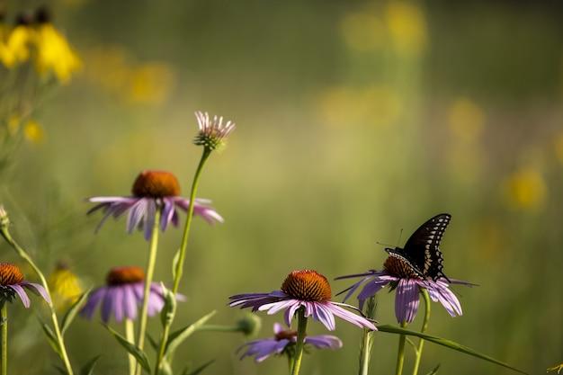 Vlinder die op een levendige bloem zit