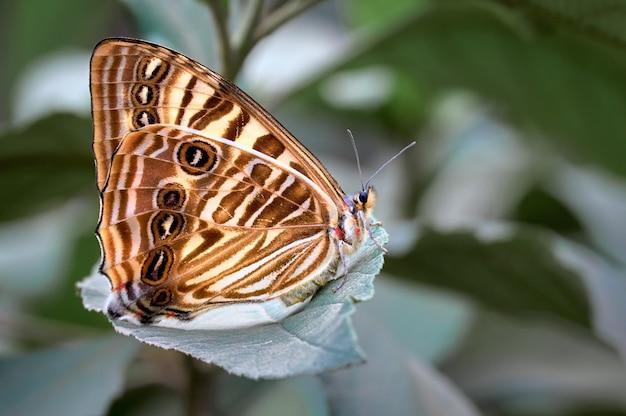 Vlinder die op het blad van de boom rust