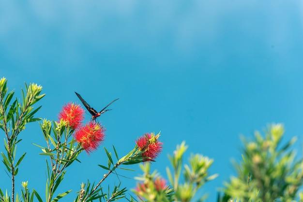 Vlinder die rond gele bloem in blauwe hemel vliegt